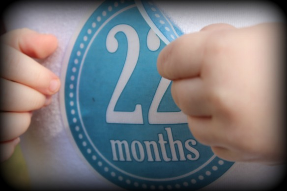 22 months 5